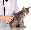 Ветеринарные клиники в Чайковском